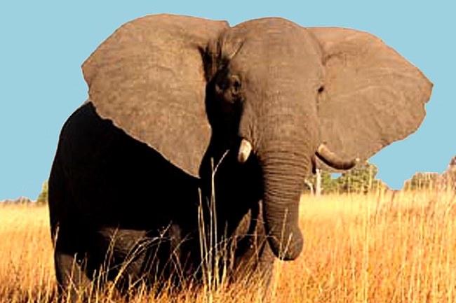Elephant 3_edited-1