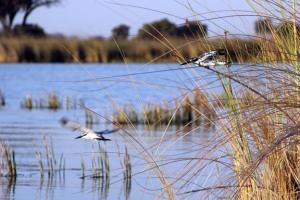 Kingfishers_edited-2