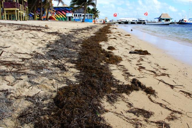 Ambergris Caye - Belize - 17