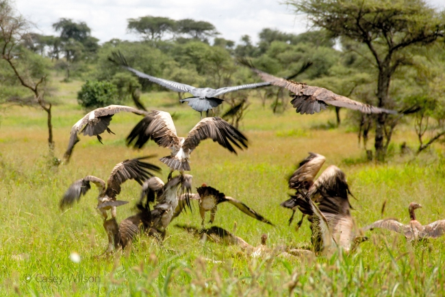 Wake of Vultures (2)
