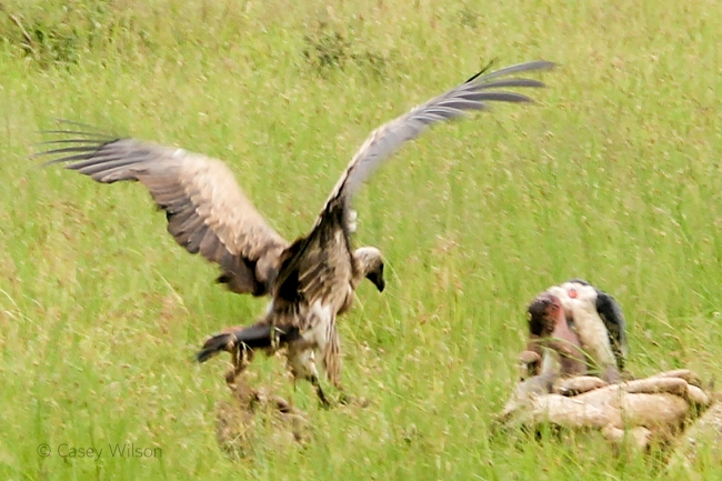 Wake of Vultures (5)